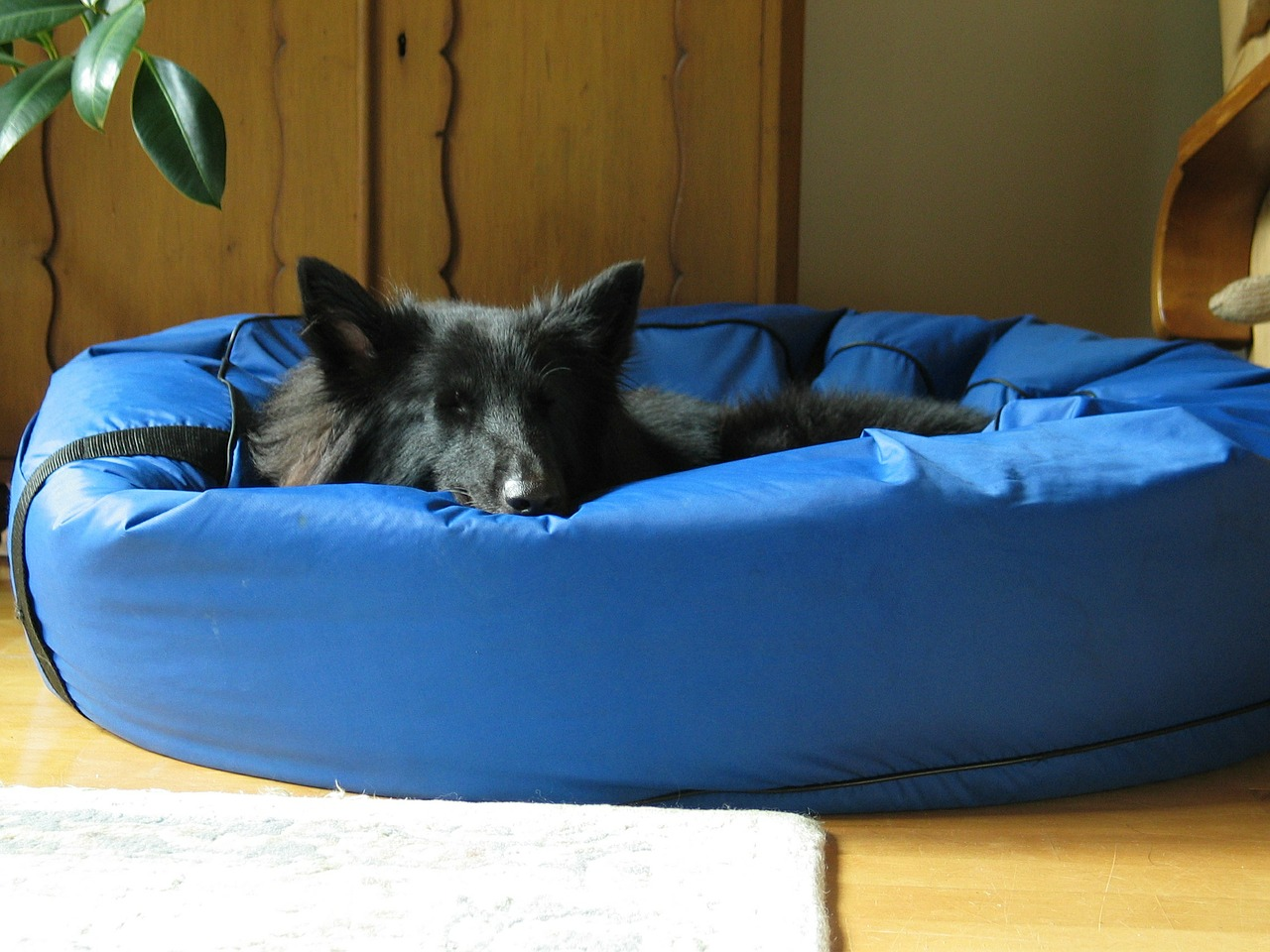 puppy relaxing in dog bed