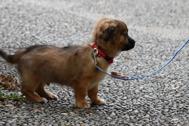 training your puppy to accept their leash