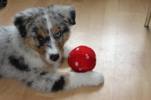 playing with your puppy