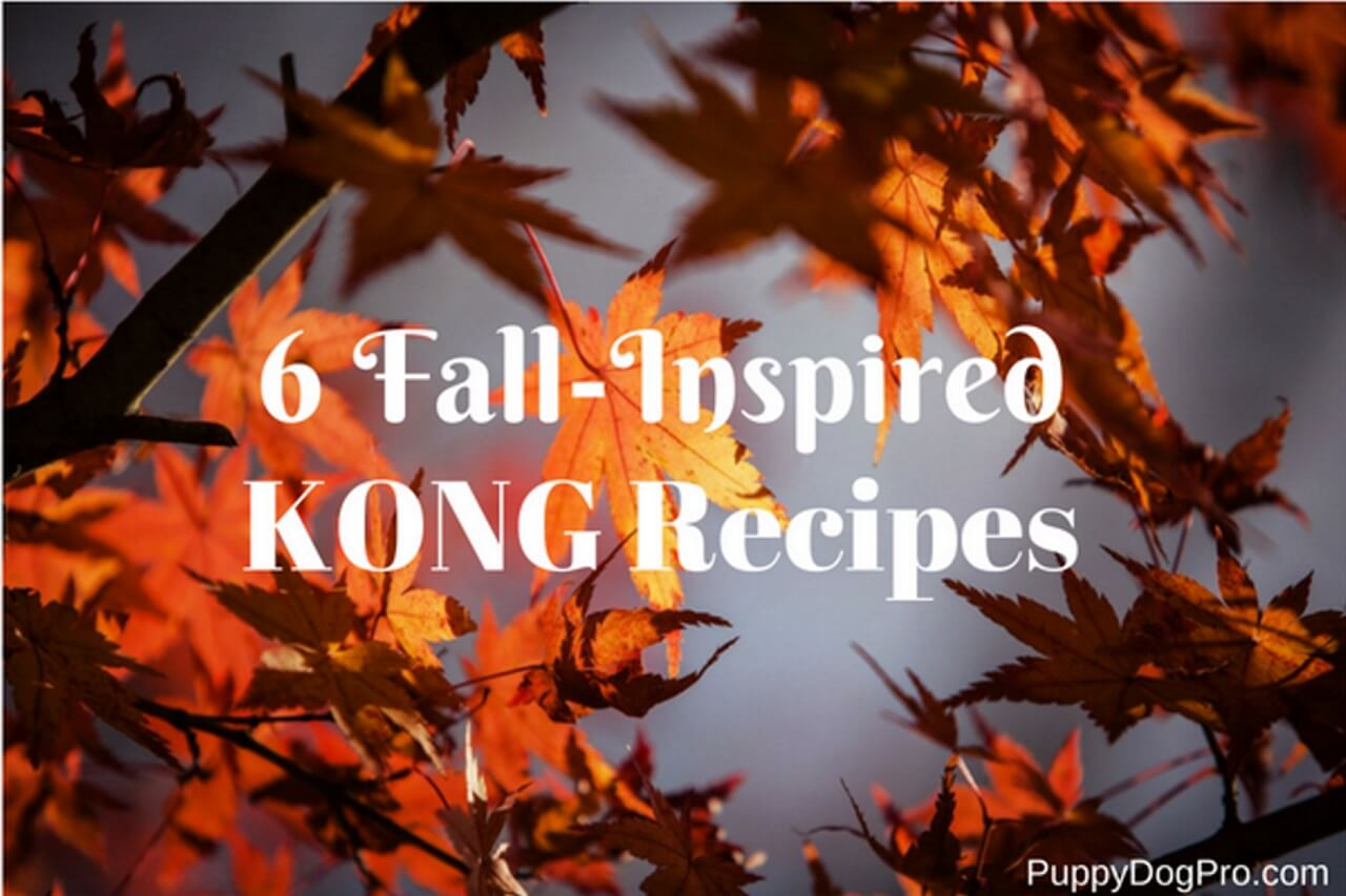 6 Fall-Inspired Kong Recipes