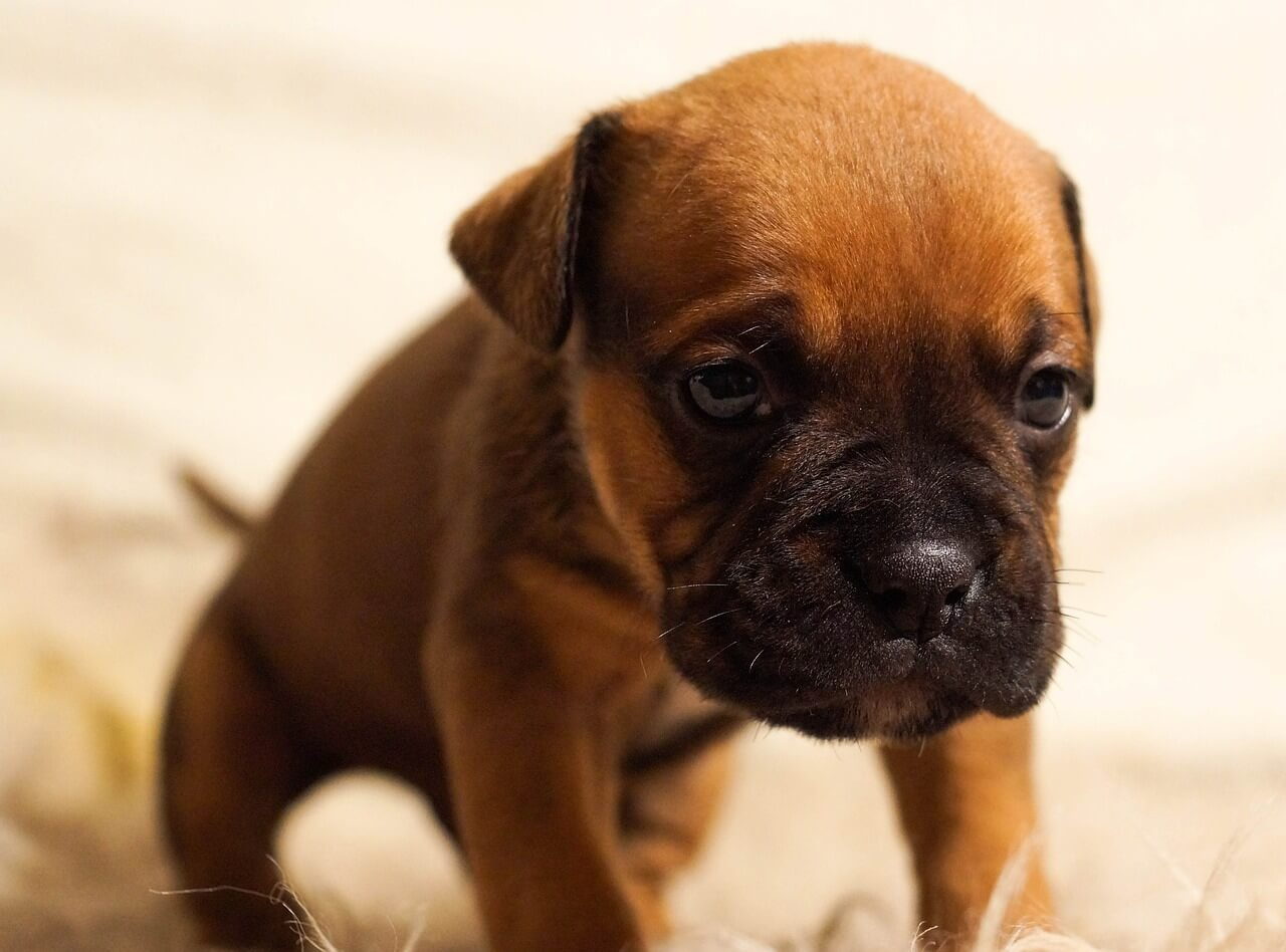 Guide To Puppy Potty Training And House Training Your Dog