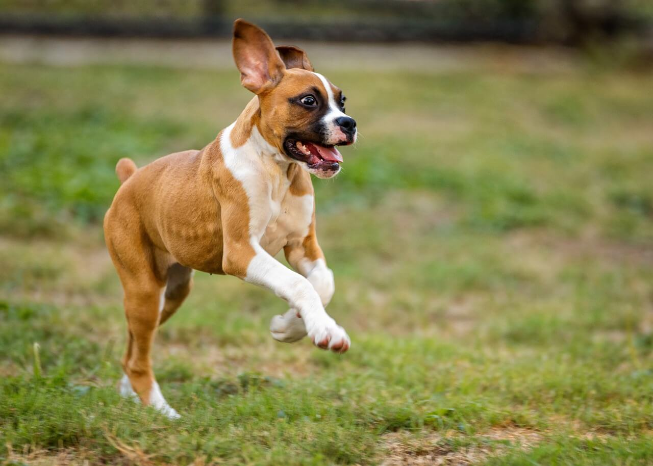 calm down your hyperactive puppy or dog (how-to guide)