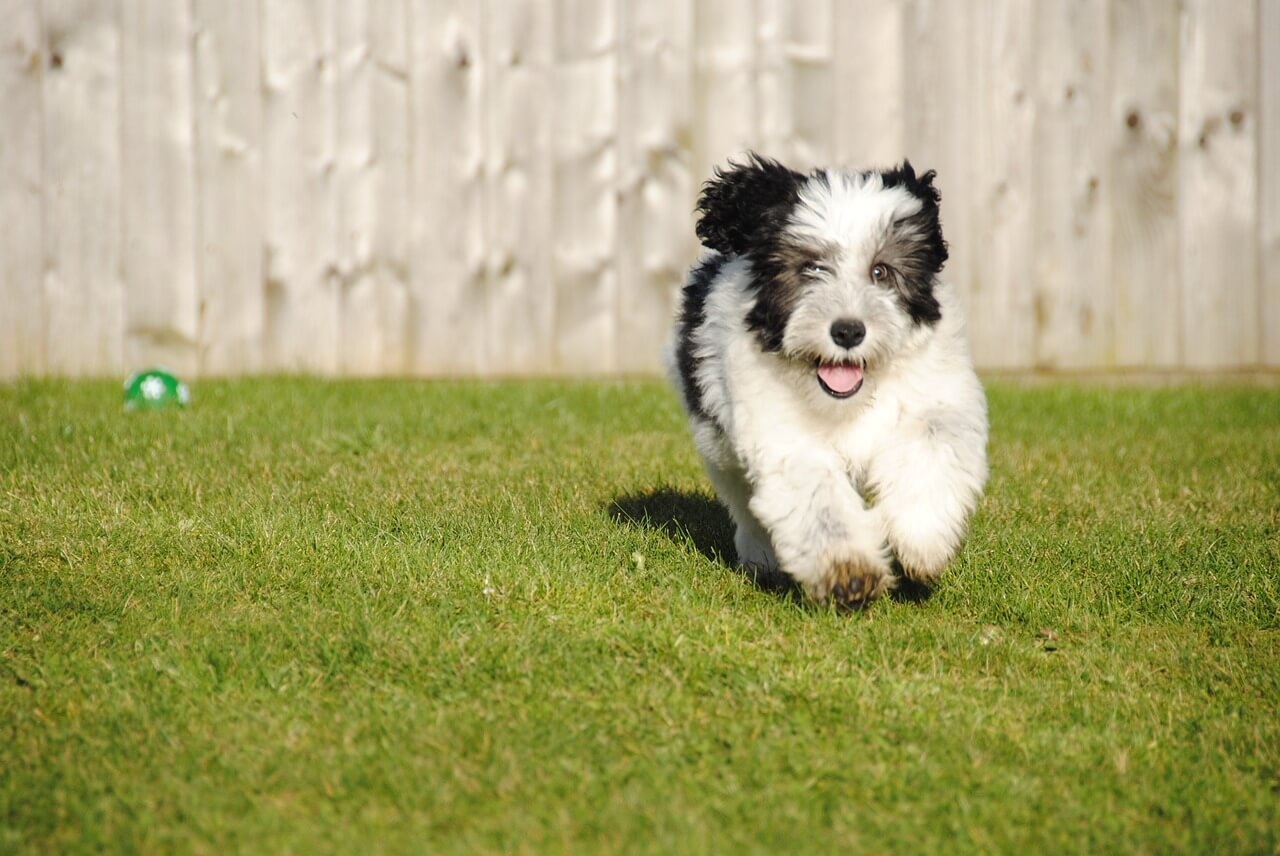 How To Train Your Puppy To Come When Called