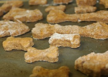 Pumpkin Cinnamon Cookies Dog Treat Recipe