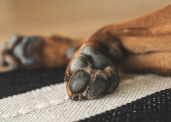 Dog's Paws Are Cold - Dog Lying Down
